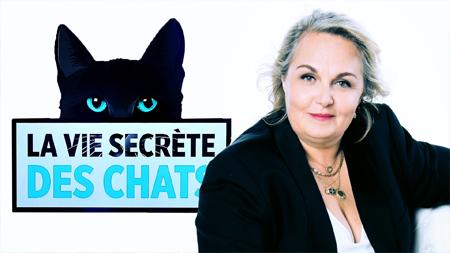 Visuel du programme La vie secrète des chats